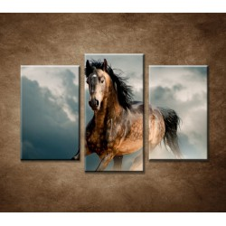 Obrazy na stenu - Divoký žrebec - 3dielny 75x50cm