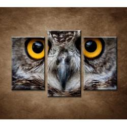 Obrazy na stenu - Sova - 3dielny 75x50cm