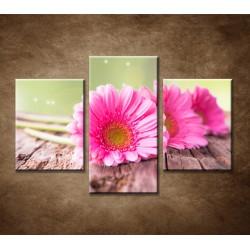 Obrazy na stenu - Tri ružové gerbery - 3dielny 90x60cm