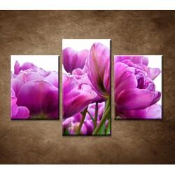 Obrazy na stenu - Tulipánové zátišie - 3dielny 90x60cm