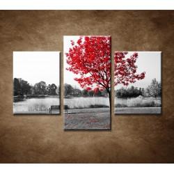 Obrazy na stenu - Lavička v parku - 3dielny 90x60cm