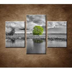 Obrazy na stenu - Zelený strom - 3dielny 90x60cm