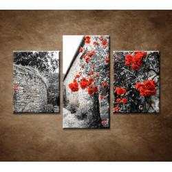 Obrazy na stenu - Červené ruže - 3dielny 90x60cm