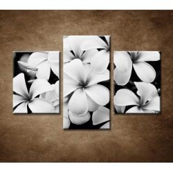 Obrazy na stenu - Pluméria - 3dielny 90x60cm