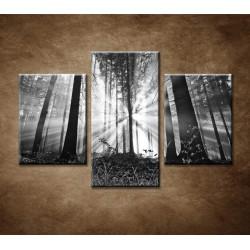 Obrazy na stenu - Les - 3dielny 90x60cm