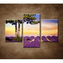 Obrazy na stenu - Strom medzi levanduľou - 3dielny 90x60cm