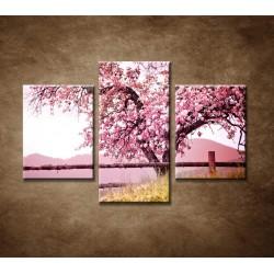 Obrazy na stenu - Strom čerešne - 3dielny 90x60cm