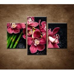 Obrazy na stenu - Bordová orchidea a bambus - 3dielny 90x60cm