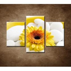 Obrazy na stenu - Žltá gerbera - 3dielny 90x60cm