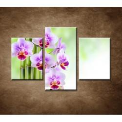 Obrazy na stenu - Zen - zátišie - 3dielny 90x60cm