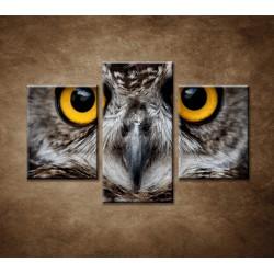 Obrazy na stenu - Sova - 3dielny 90x60cm
