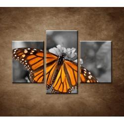 Obrazy na stenu - Oranžový motýľ - 3dielny 90x60cm