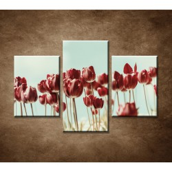Obrazy na stenu - Retro tulipány - 3dielny 90x60cm