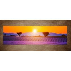 Obraz - Levanduľové pole zo stromami - panoráma