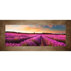 Obraz - Levanduľová krajina - panoráma