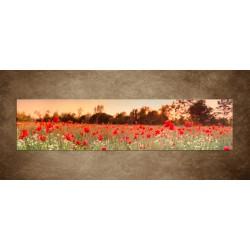 Obraz - Červené makové pole - panoráma