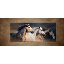 Obraz - Kone s dlhými hrivami - panoráma