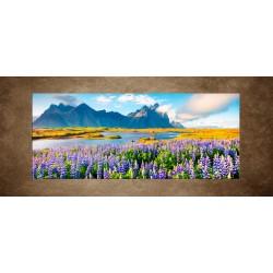 Obraz - Kvitnúce kvety na ostrove Stokksnes - panoráma