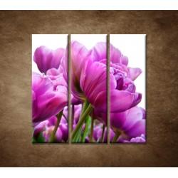 Obrazy na stenu - Tulipánové zátiešie - 3dielny 90x90cm