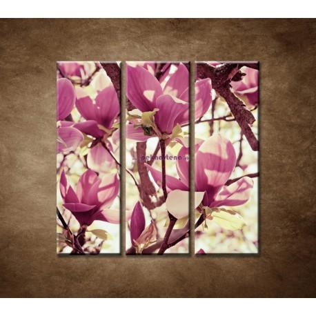 Obrazy na stenu - Kvety magnólie - 3dielny 90x90cm