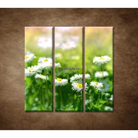 Obrazy na stenu - Kvety sedmokrásky - 3dielny 90x90cm