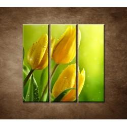 Obrazy na stenu - Žlté tulipány - 3dielny 90x90cm
