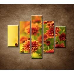 Obrazy na stenu - Jesenné chryzantémy - 5dielny 100x80cm