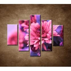 Obrazy na stenu - Ružové chryzantémy - 5dielny 100x80cm