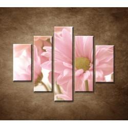 Obrazy na stenu - Ružová gerbera - 5dielny 100x80cm