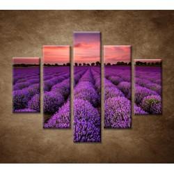 Obrazy na stenu - Krajina s levanduľou  - 5dielny 100x80cm