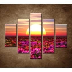 Obrazy na stenu - Farebné kvety pri západe - 5dielny 100x80cm