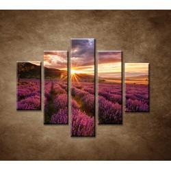 Obrazy na stenu - Levanduľové pole za úsvitu - 5dielny 100x80cm
