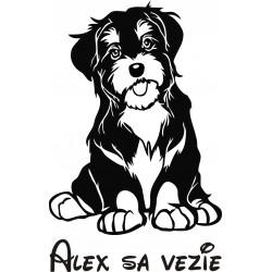 Nálepka na auto - Havanský psík