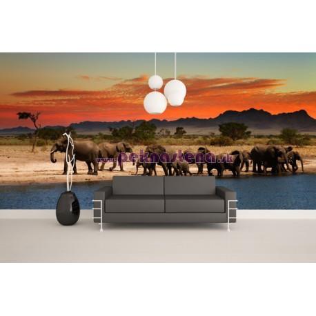 Fototapety - Safari