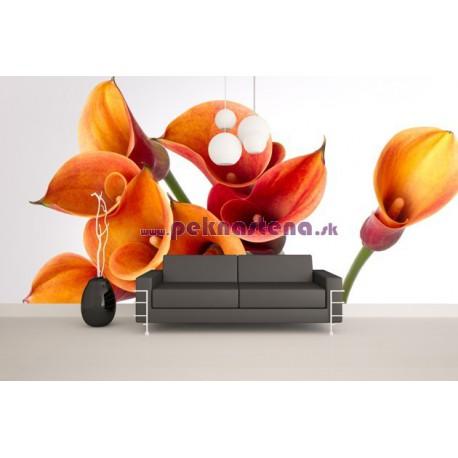 Fototapeta - Oranžové kaly