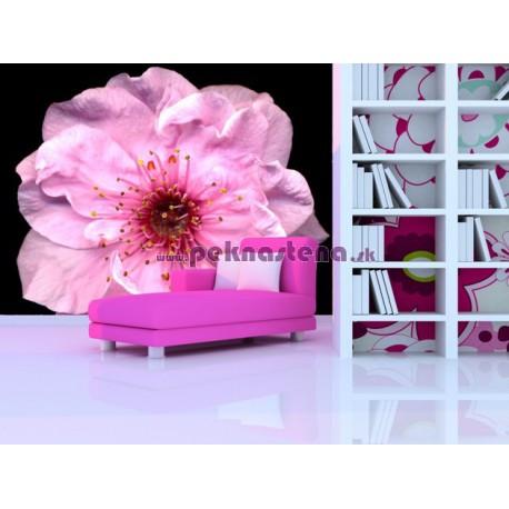 Fototapeta - Kvet čerešne