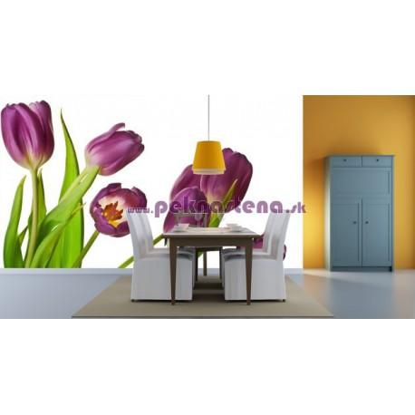 Fototapety - Fialové tulipány