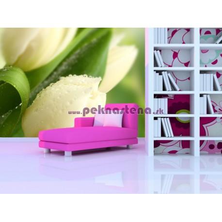 Fototapeta - Rosa na tulipáne