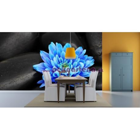 Fototapety - Modrý kvet na kameňoch