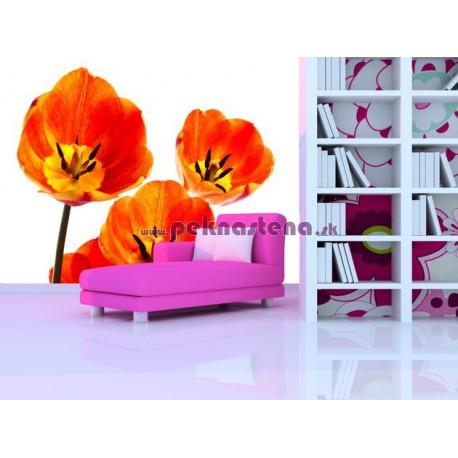 Fototapeta - Oranžové tulipány