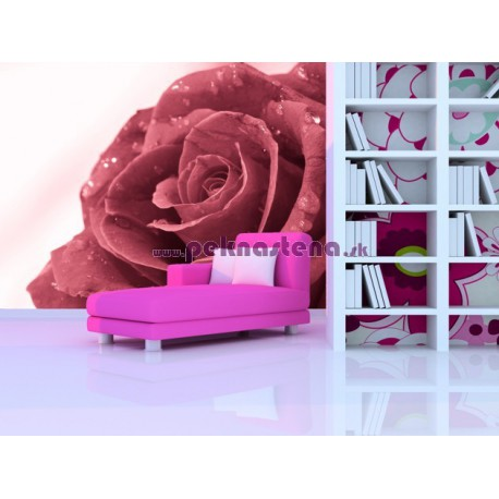 Fototapeta - Ruža s rosou