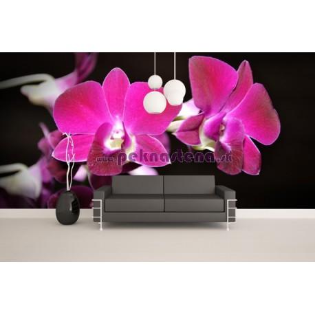 Fototapeta - Ružová orchidea