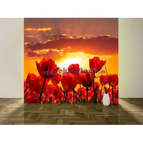 Fototapety - Západ slnka nad tulipánmi