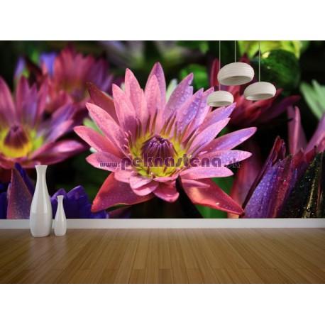 Fototapety - Lotosové kvety
