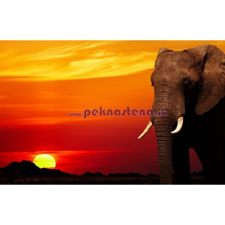 Fototapeta - Afrika