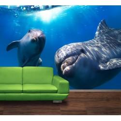 Delfíni pod vodou