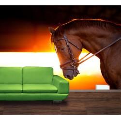 Kôň v stajni
