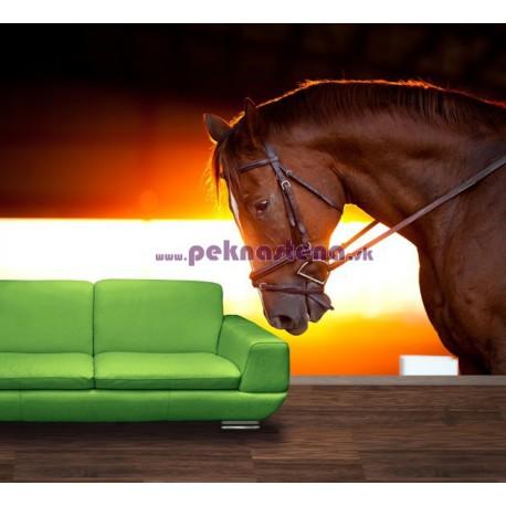 Fototapety - Kôň v stajni