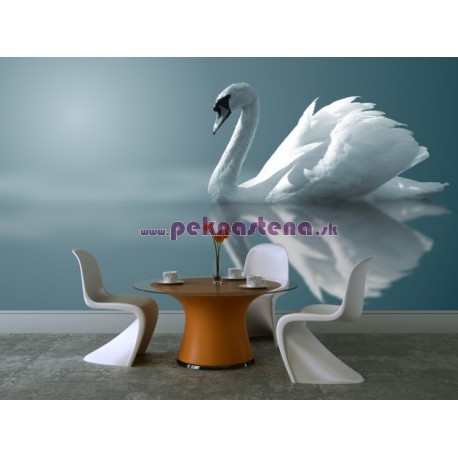 Fototapeta - Labuť