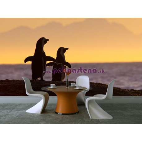 Fototapeta - Tučniaky